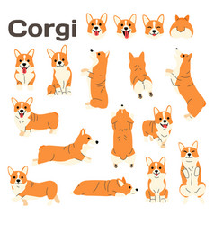 corgidog in action happy dog vector image
