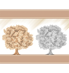 Detailed graphic tree sepia and pencil vector