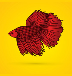 Red siamese fighting fish graphic vector
