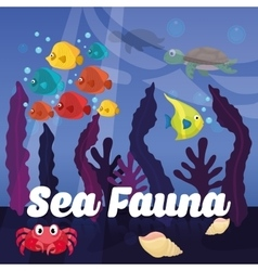 Sea Fauna graphic design vector