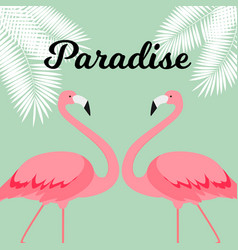 summer creative poster with pink flamingo card of vector image