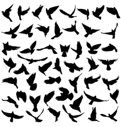 Concept of love or peace Set silhouettes doves vector