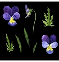 Set of watercolor drawing violet flowers vector