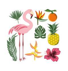 beautiful set icon with exotic flamingo and vector image vector image