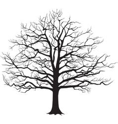 Black silhouette bare tree vector
