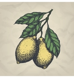 Branch with lemons hand drawn vintage style vector image vector image