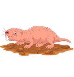 Cartoon naked mole rat smiling vector
