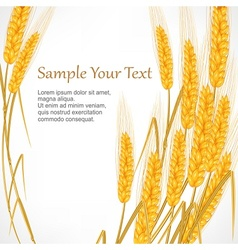 Ears of wheat on white vector