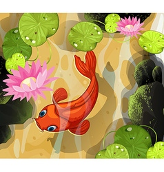 Koi swimming in the pond vector