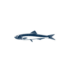 Small shoaling fish anchovy isolated anchoa icon vector