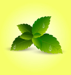 realistic mint leaves with soft shadow vector image