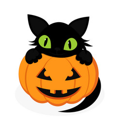 black cat with pumpkin vector image