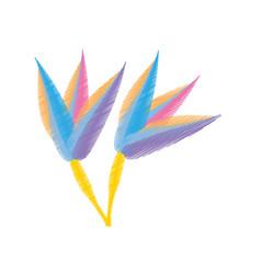 Drawing paradise flowe vector