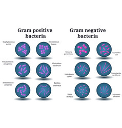 Gram positive and negative bacteria in petri dish vector