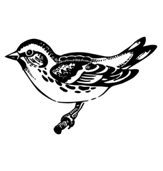 Siskin bird hand-drawn vector image vector image