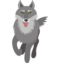 wolf picture vector image