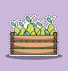 Delicios and fresh pears fruit inside basket vector