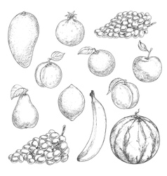 Fresh fruits sketches for food design vector