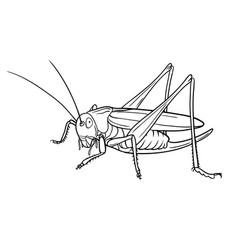 grasshopper graphic version vector image