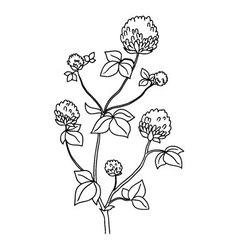 Isolated clover flower Wild flower - background vector