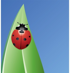 ladybird on a leaf vector image