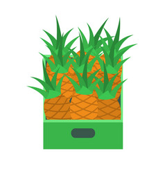shelf with pineapples in supermarket grocery store vector image