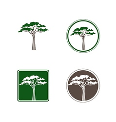 Acacia Tree Logo vector image vector image