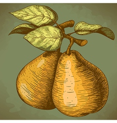 engraving pear retro vector image vector image