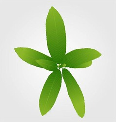 Green Leaves Isolated on White Background vector image
