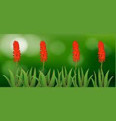 Aloe vera flowers in garden vector