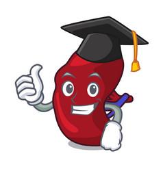 graduation spleen character cartoon style vector image