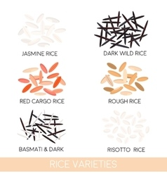Rice varieties vector image