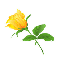 rosebud yellow rose twig with leaves on a white vector image