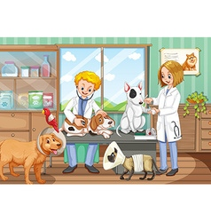 Two vets working in the animal hospital vector