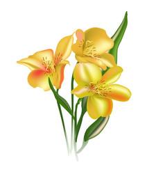 Watercolor astromelia floral unique flower vector