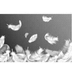 White feathers background falling flying fluffy vector