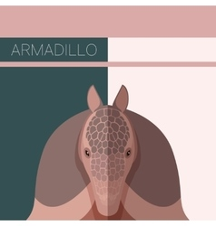 Flat postcard with armadillo vector