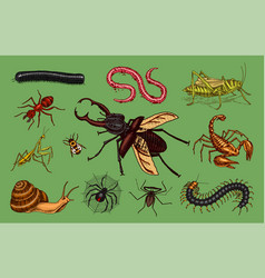 big set of insects vintage pets in house bugs vector image