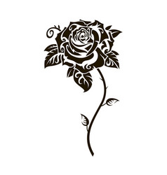 black rose image vector image
