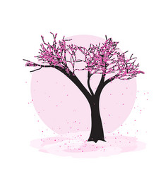 blooming sacura tree vector image