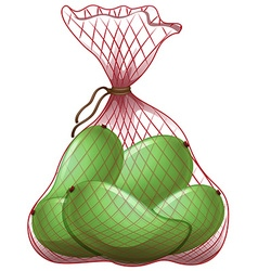 Green mangoes in net bag vector