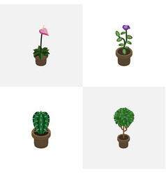 Isometric flower set of grower flower peyote and vector