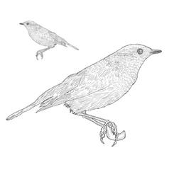 Bird sitting down on the twig Botanical vintage vector image
