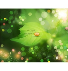 Summer background with green blur and leaf vector