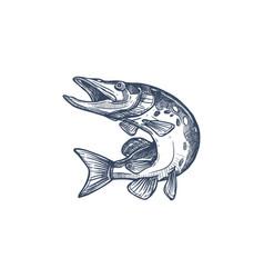 Atlantic salmon ray-finned fish salmonidae icon vector