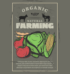 Farm vegetables harvest and cattle vector