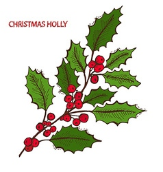 hand drawn holly vector image vector image