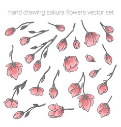 large set of delicate pink sakura cherry flowers vector image