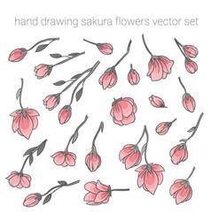 Large set of delicate pink sakura cherry flowers vector