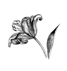 lily flower on the side vector image